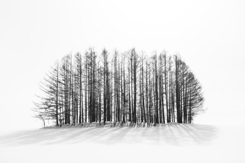 Biei Hokkaido, Japan vinterbygd royaltyfria bilder