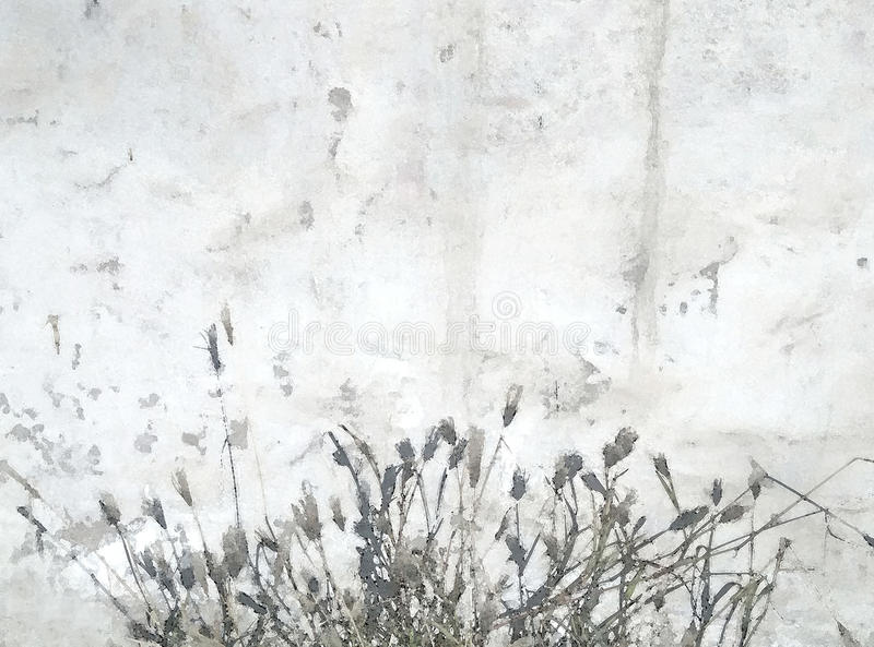 Biel świrzepy i ściany obraz royalty free
