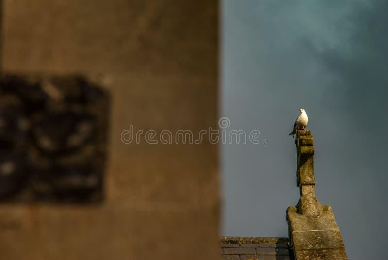 Biel gołąbka na białym krzyżu kościół chrześcijański zdjęcie royalty free
