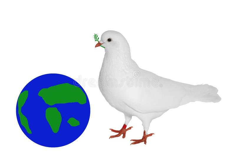 Biel gołąbka z zieloną gałąź w swój belfrze obrazy royalty free