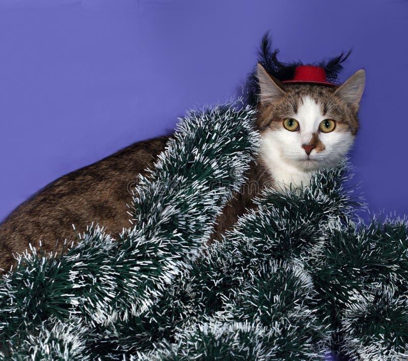 Biel i tabby kot w czerwonym obsiadaniu na b kapeluszu i bożego narodzenia świecidełka zdjęcia stock