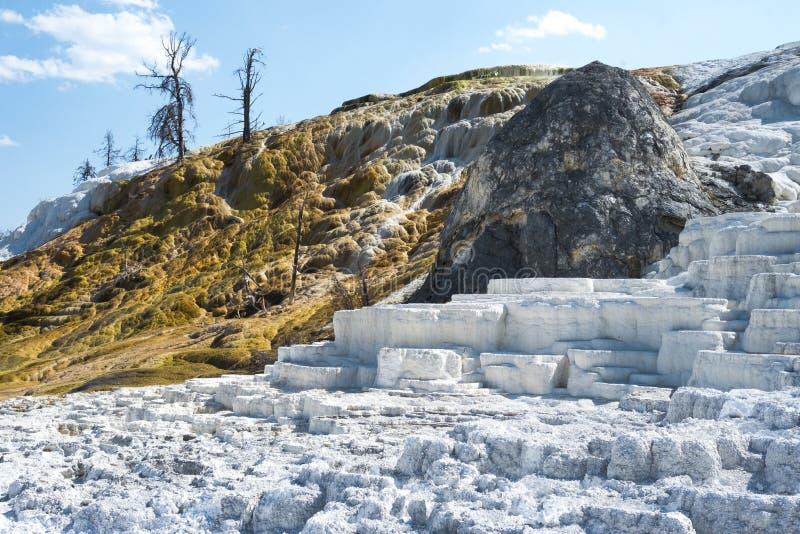 Biel i złociści tarasy przy Mamutowymi Gorącymi wiosnami Tarasujemy, Yellowstone park narodowy, Wyoming, usa zdjęcie stock