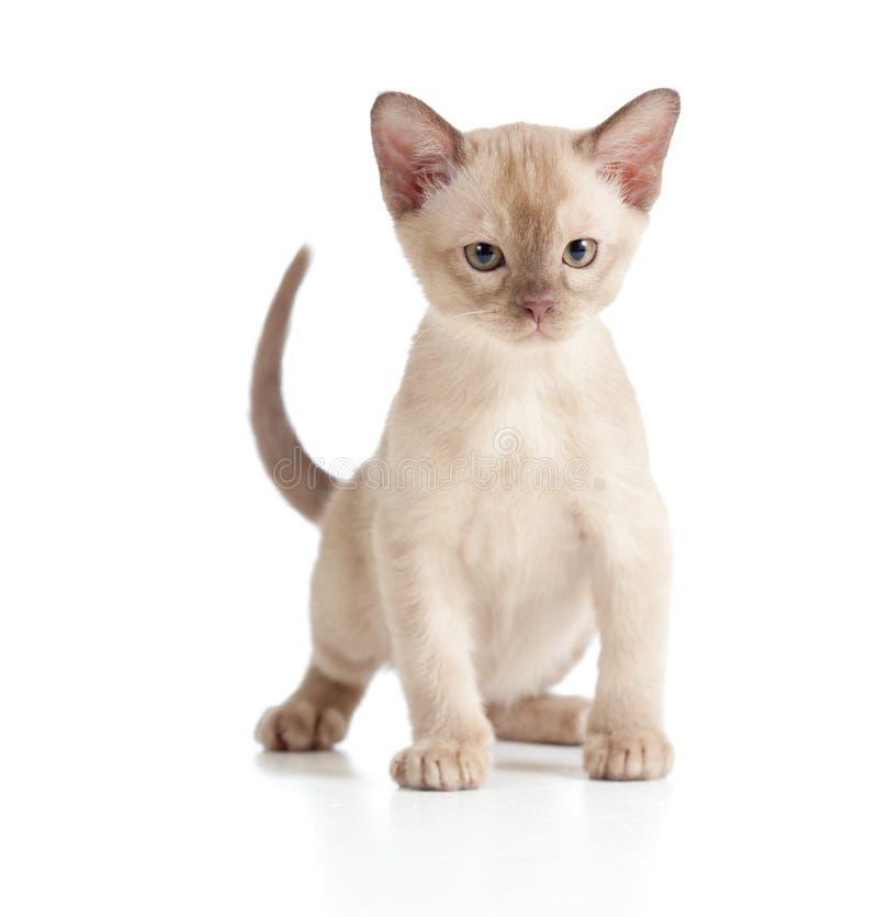 biel kota śmieszny figlarki biel obraz stock