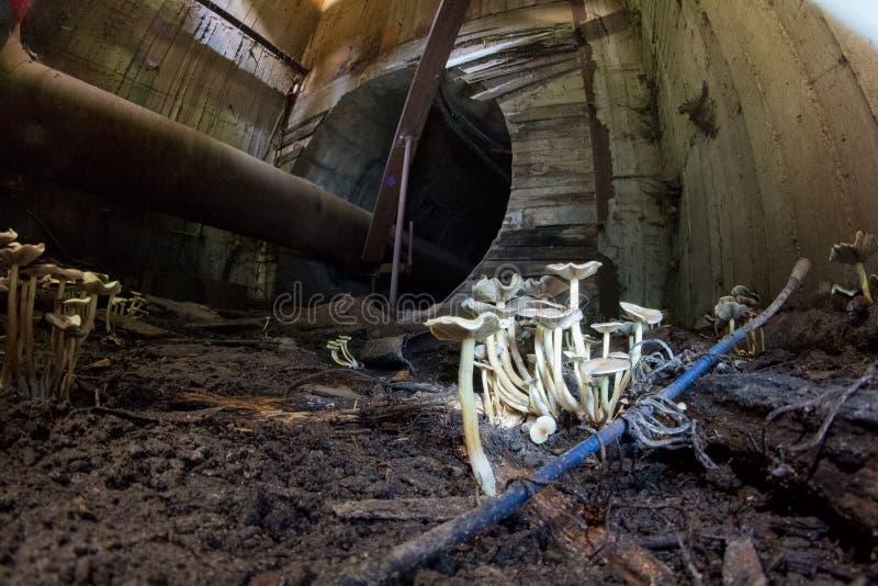 Biel ono rozrasta się w podziemnym ściekowym tunelu zdjęcia stock