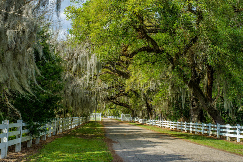 Biel płotowa droga, hiszpański mech, wiosna, Louisiana obraz stock