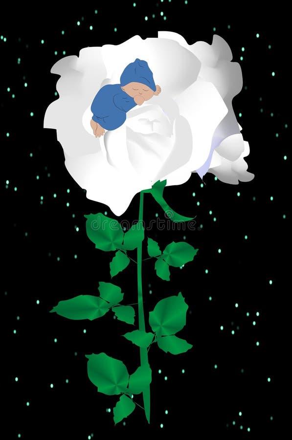 Biel róża,