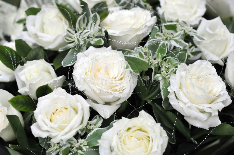 Biel róża czystością jest fotografia royalty free