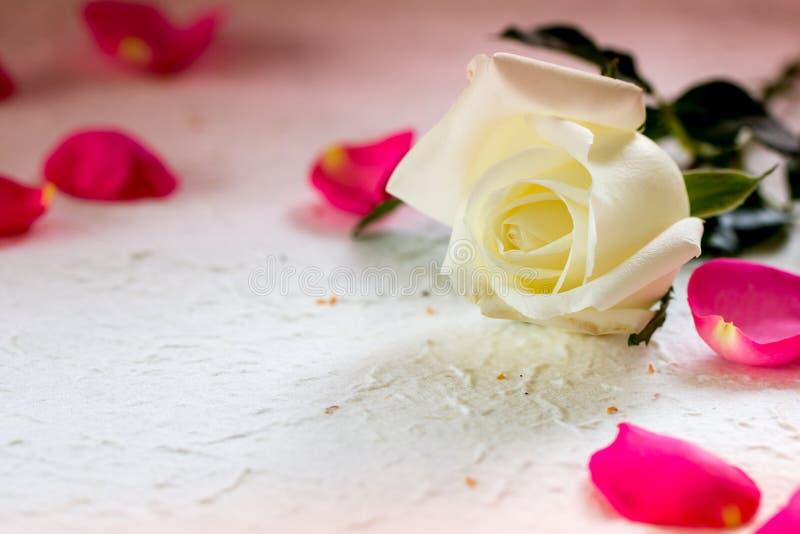 Biel róża na morwa papierze zdjęcie royalty free