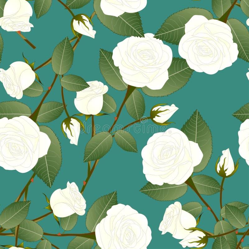 Biel róża - Rosa na Zielonym cyraneczki tle pary dzień ilustracyjny kochający valentine wektor również zwrócić corel ilustracji w royalty ilustracja
