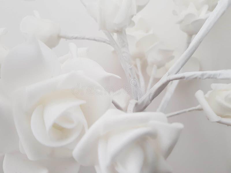 Biel róży światło obraz stock