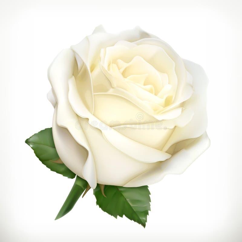 Biel róży ilustracja ilustracja wektor