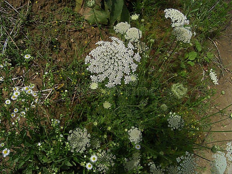 Biel rośliny w zielonej trawie zdjęcie royalty free