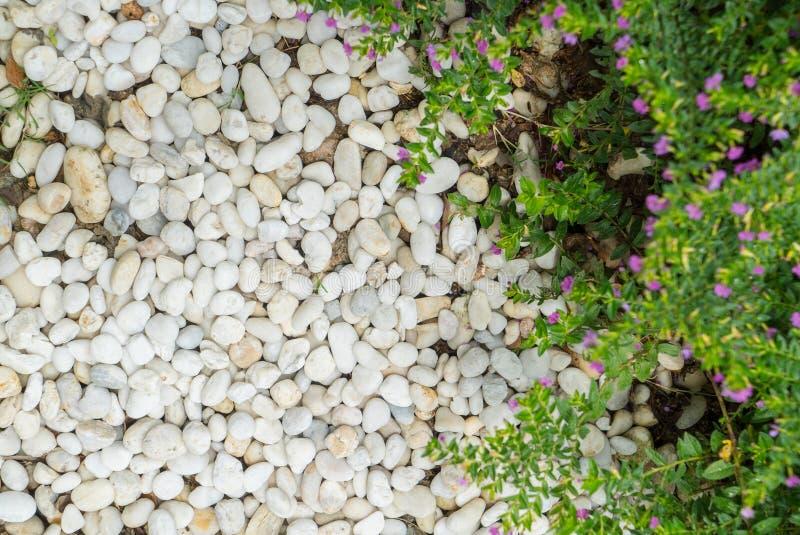 biel tekstury kamienny tło obraz stock