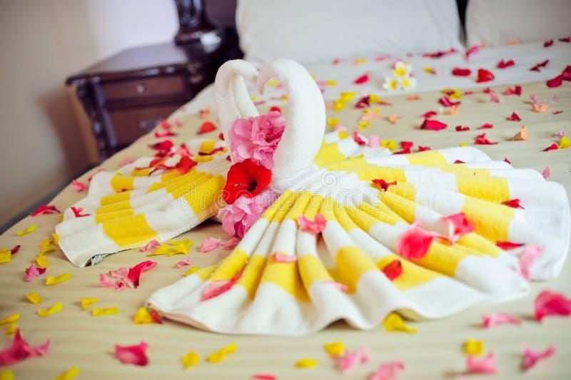 Bielu dwa ręcznikowi łabędź i czerwieni róża na łóżku w Miodowej księżyc nadają się fotografia royalty free