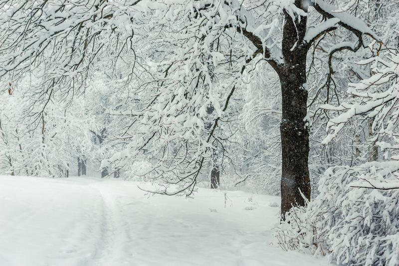 Bielu krajobraz - wlec, opuszczać las w parku fotografia royalty free