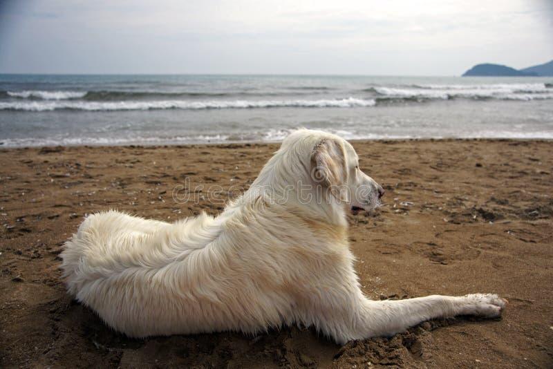 Bielu pies na Zakynthos wyspie w Grecja obraz stock
