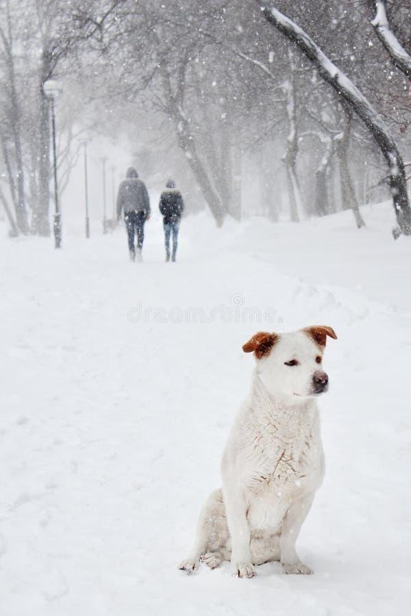 Bielu pies pod śniegiem zdjęcia royalty free