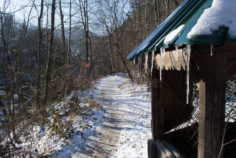 Bien con los carámbanos en el bosque entre los picos de montaña fotografía de archivo
