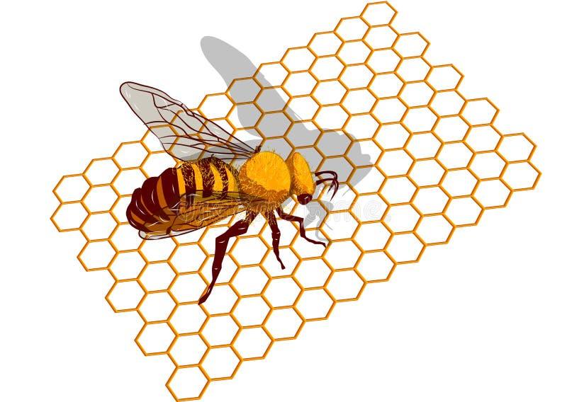 Biene auf honeycells lizenzfreie abbildung