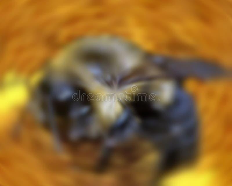 Biene in der Bewegung