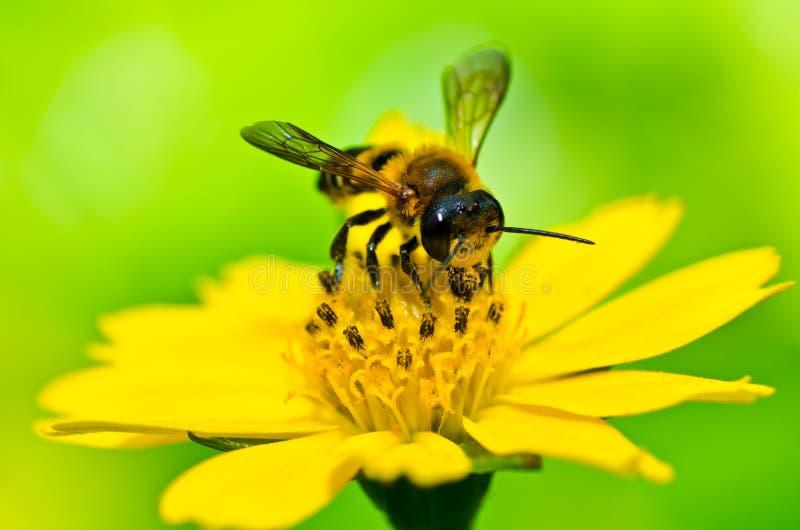 Biene in der grünen Natur lizenzfreie stockbilder