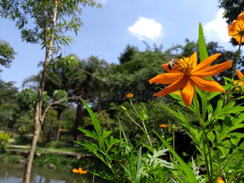 Biene in einer Blume stockfotos