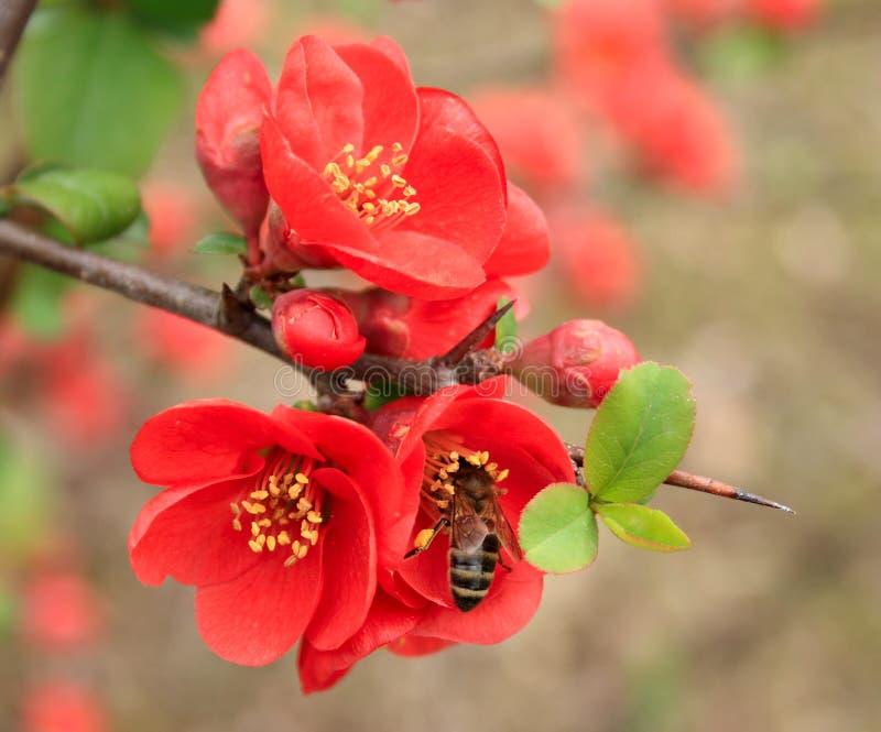 Biene sitzt auf einer Blume lizenzfreies stockbild