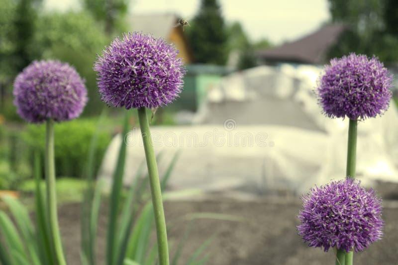 Biene und dekorative Zwiebeln lizenzfreie stockbilder