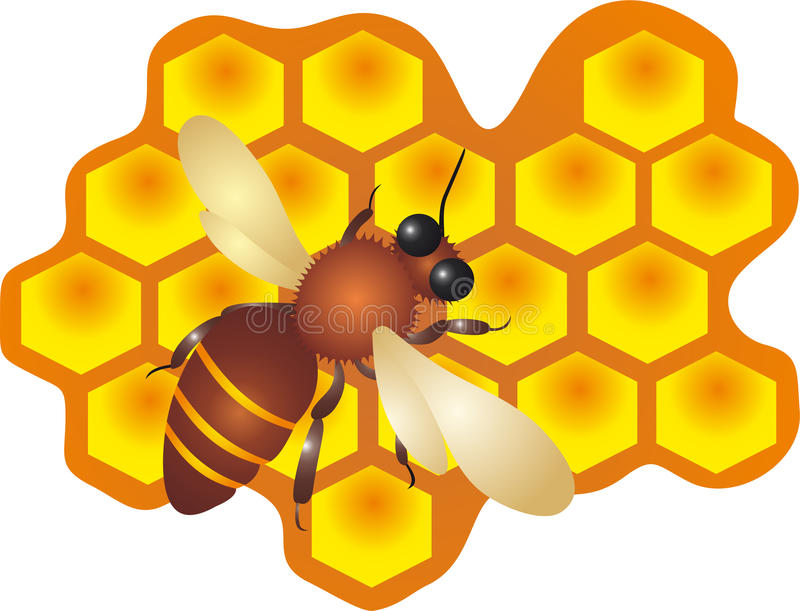 Biene und Honig   vektor abbildung