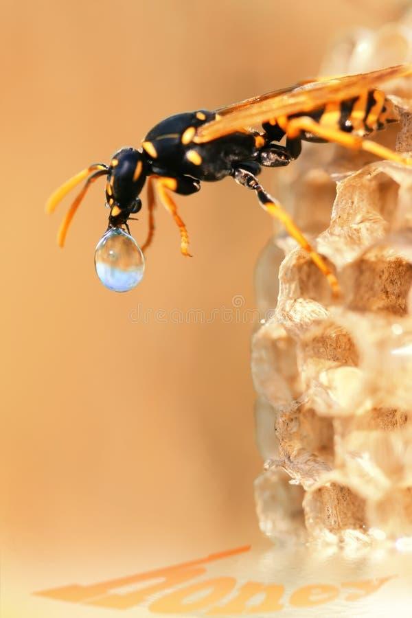Biene und Tropfen des Nektars stockfotos