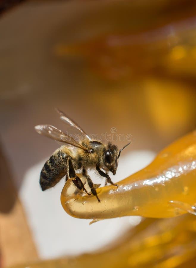 Biene zieht auf bunte Trockenfr?chtemasse ein stockfotos