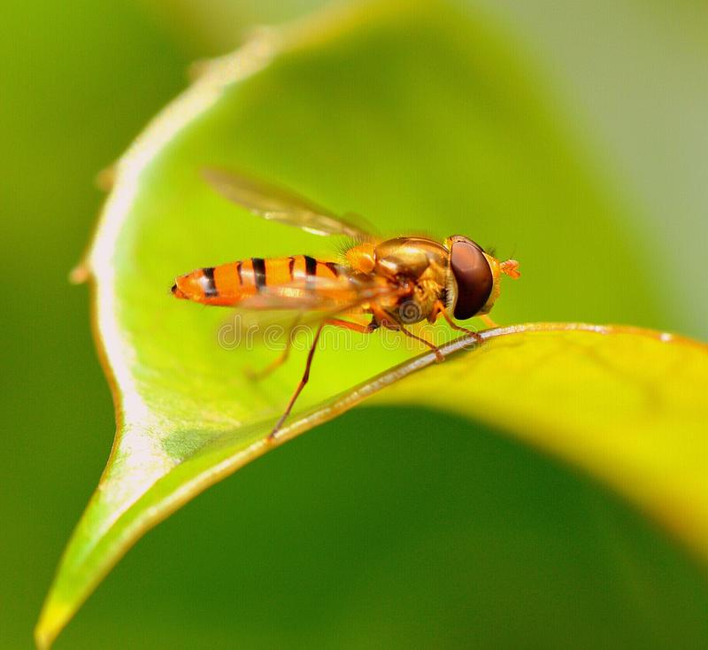 Bienen-Arbeitskraft stockbild