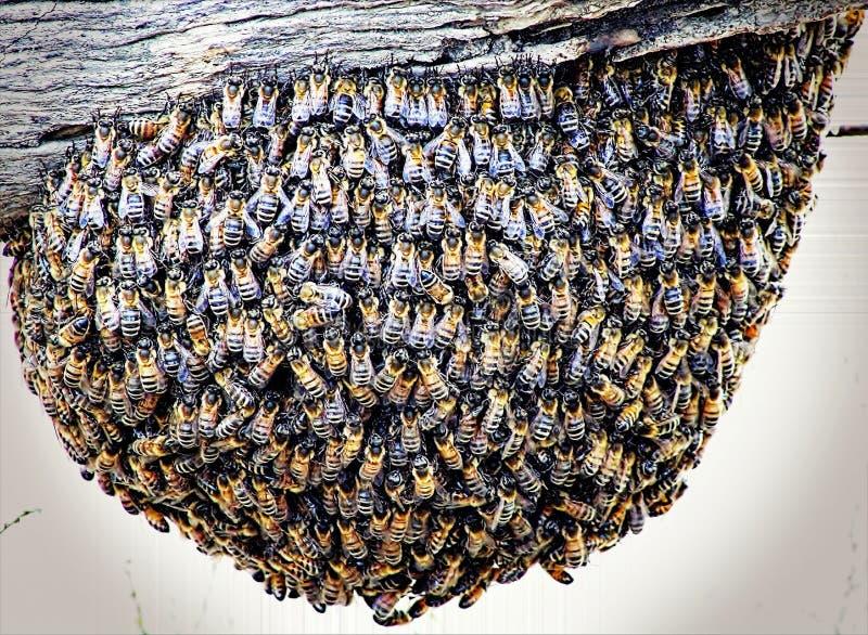 Bienen auf Beitrag lizenzfreie stockbilder