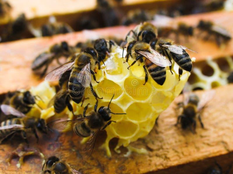 Bienen auf Bienenwaben im Sommer stockfotos