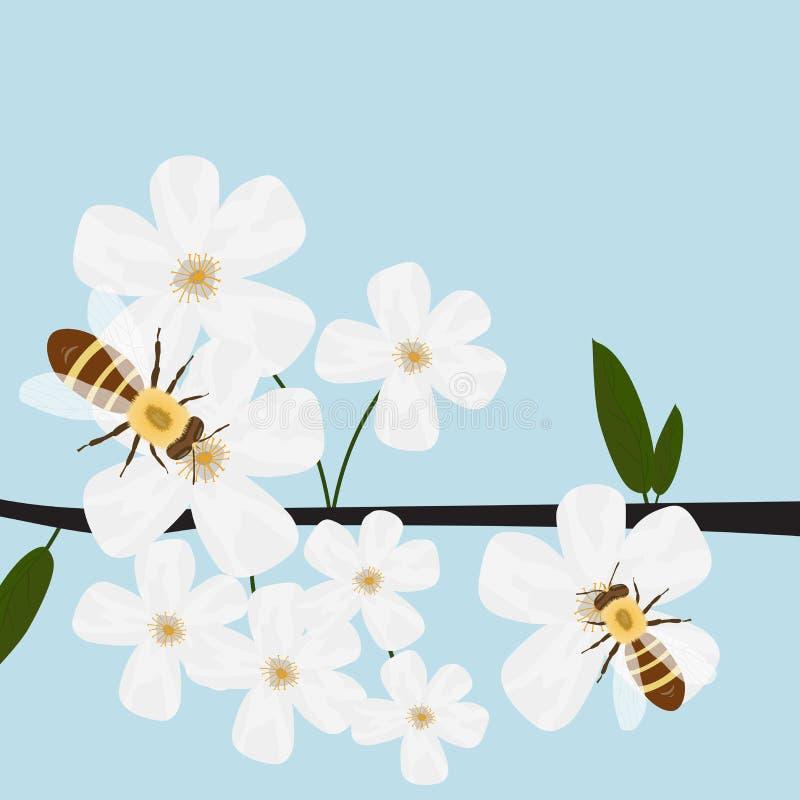 Bienen, die Nektar von Blumen, Frühling, blühende Bäume sammeln vektor abbildung
