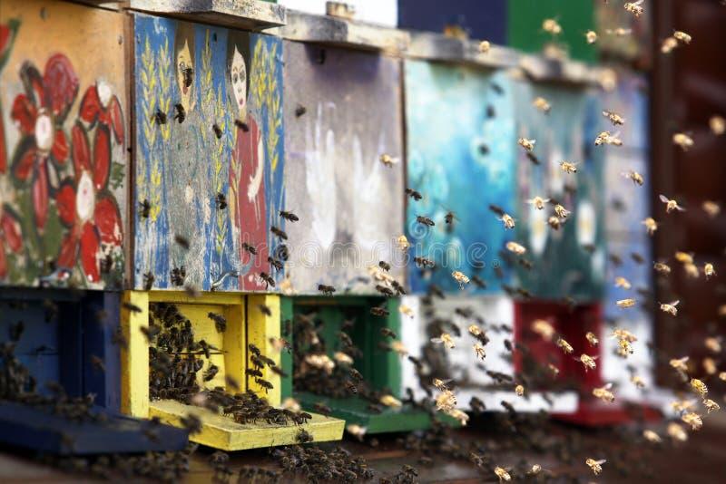 Bienen fliegen in den Bienenstock lizenzfreies stockbild