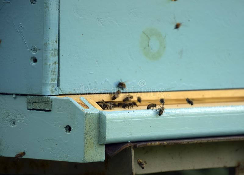 Bienen fliegen zum Bienenstock beekeeping Ein Schwarm von Bienen holt Honighaus apiary stockbilder