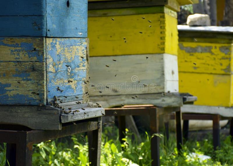 Bienen fliegen zum Bienenstock beekeeping Ein Schwarm von Bienen holt Honighaus apiary stockfotos