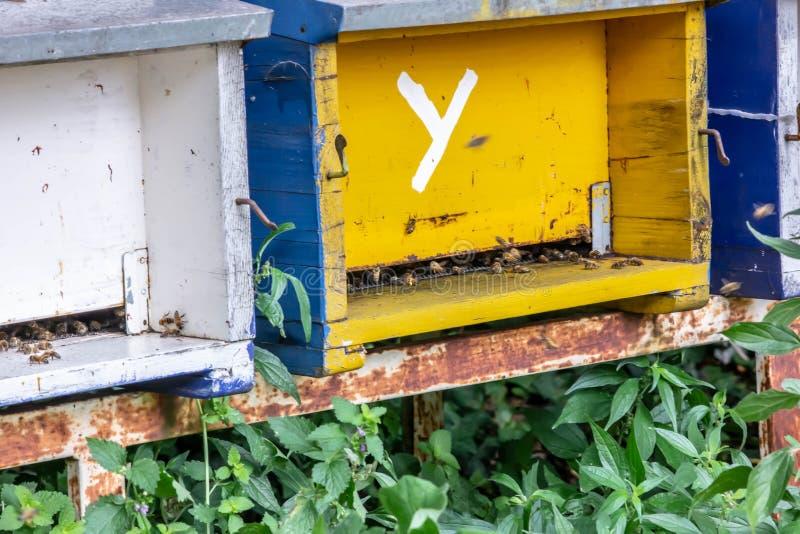 Bienen in ihren Urnen bedacht auf ihrer Arbeit es gibt die, die wer auch immer verteidigt abkühlen diese kleinen Insekten sind fü stockbild