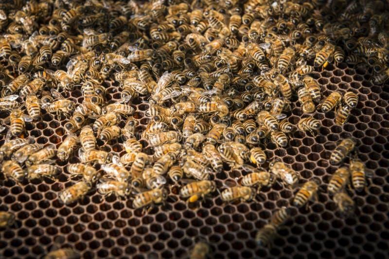 Bienen im Bienenstock stockfotografie