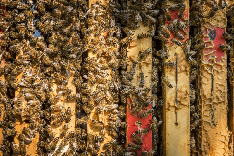Bienen im Bienenstock lizenzfreie stockfotografie