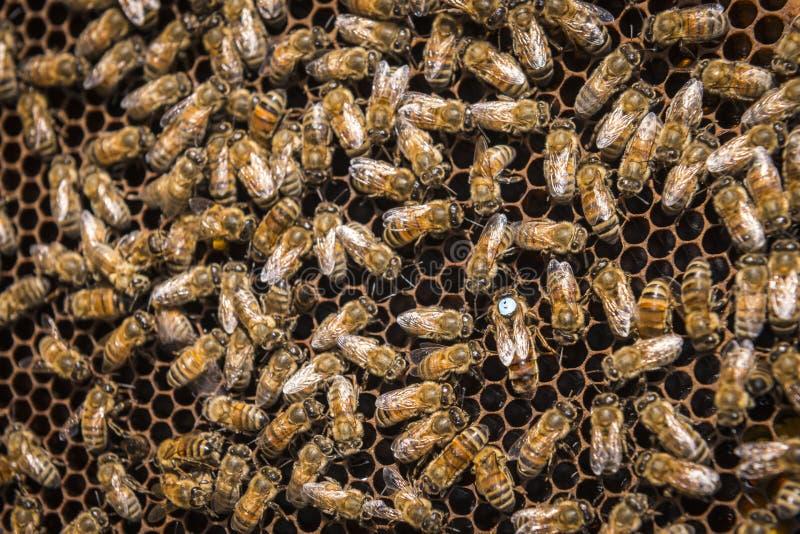 Bienen im Bienenstock stockbild