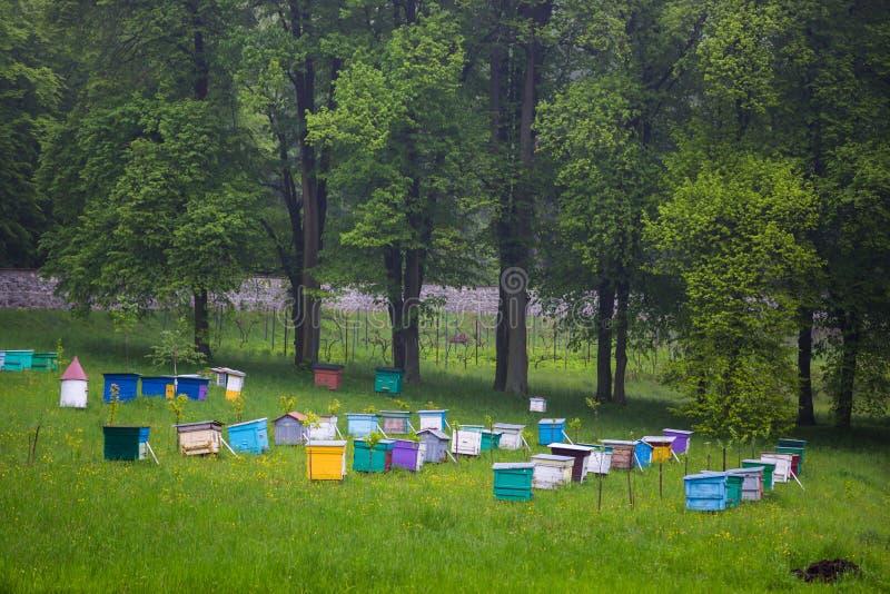 bienen Imker, die im Bienenhaus arbeiten stockfoto
