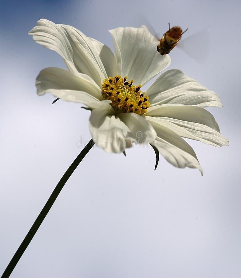 Bienen-Landung stockbilder