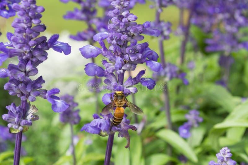 Bienen mit Blumen stockbild