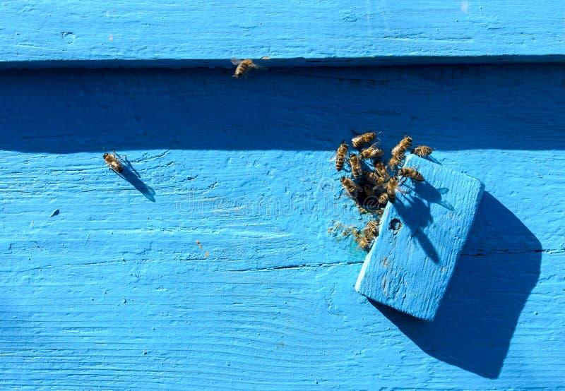 Bienen nahe dem Bienenstock lizenzfreies stockfoto