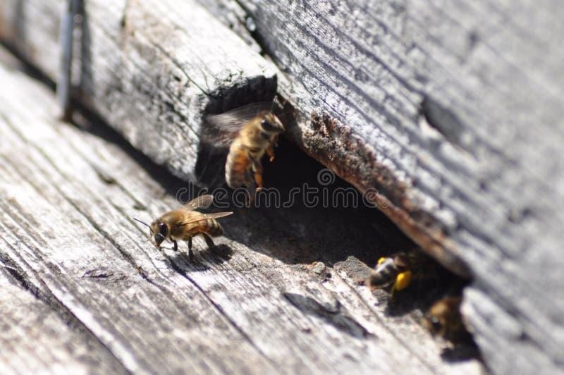 Bienen und Bienenstock stockfoto