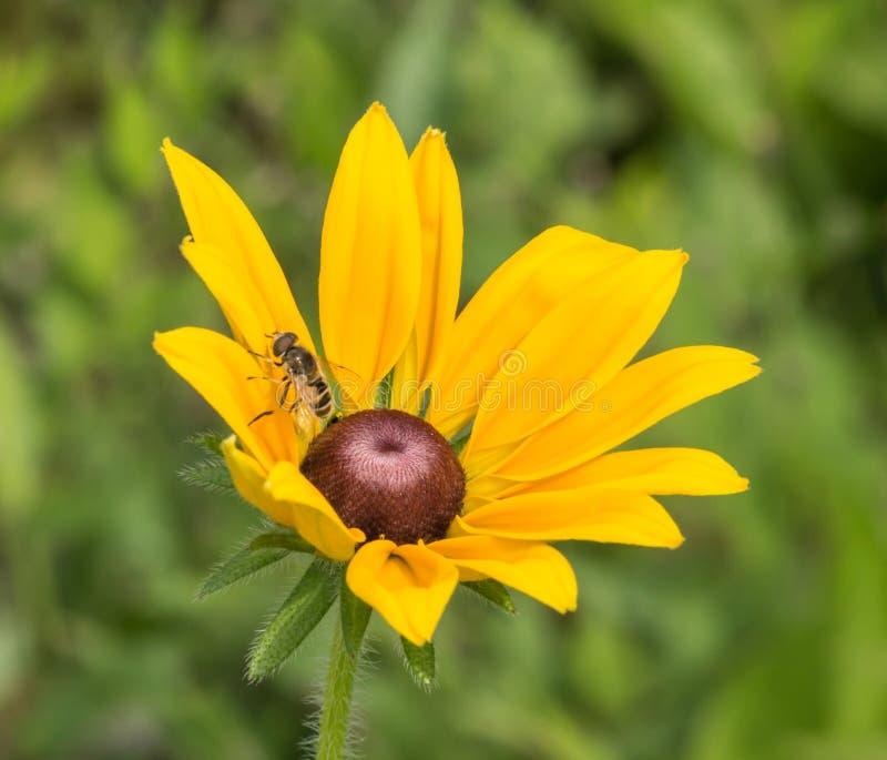Bienen und Blumen stockbilder