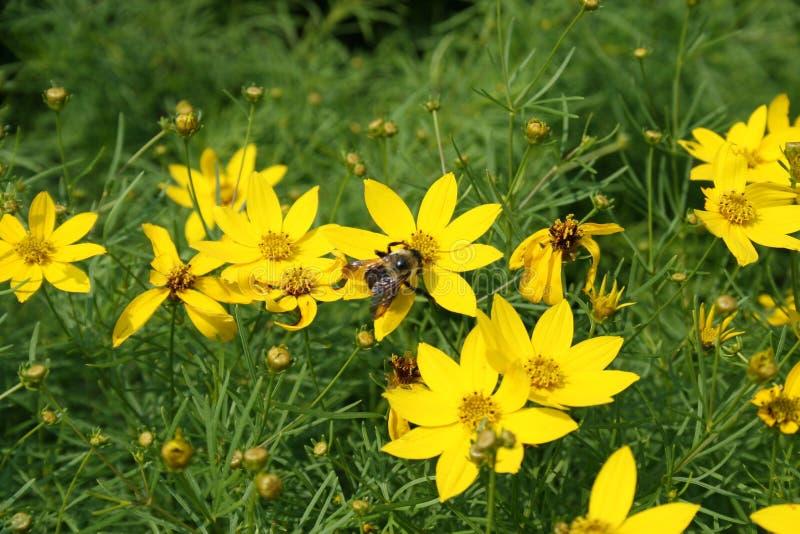 Bienen und Blumen 2019 II lizenzfreie stockbilder