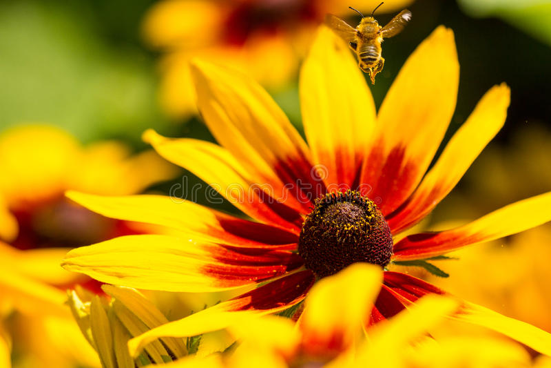 Bienen-Yoga-Haltung lizenzfreie stockbilder